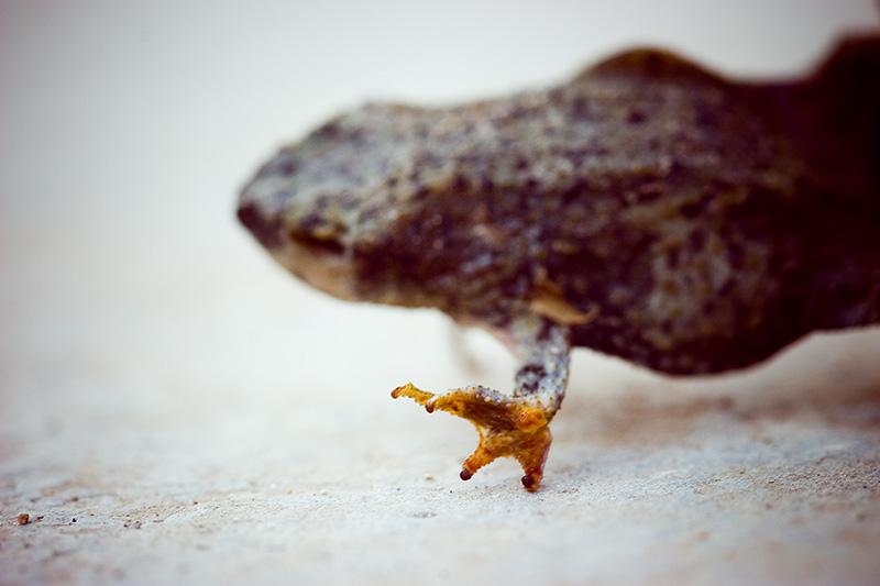 A dead frog dancing.
