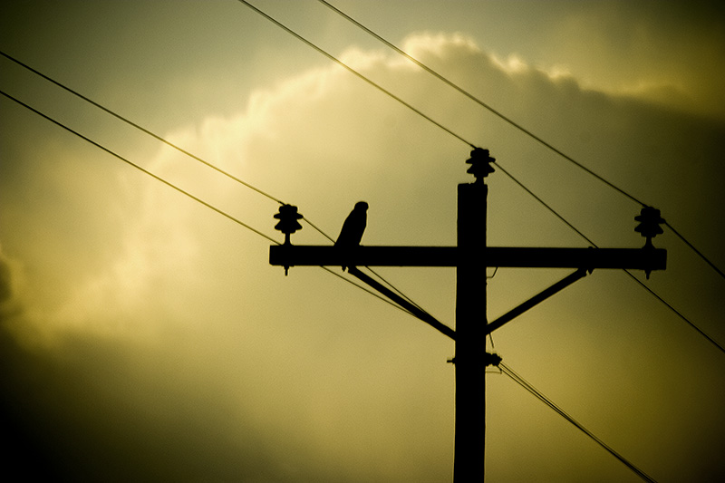 A backlit hawk sitting on a telephone pole.