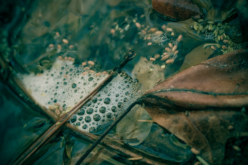 A dead leaf below the surface of a river, with bubbles above.