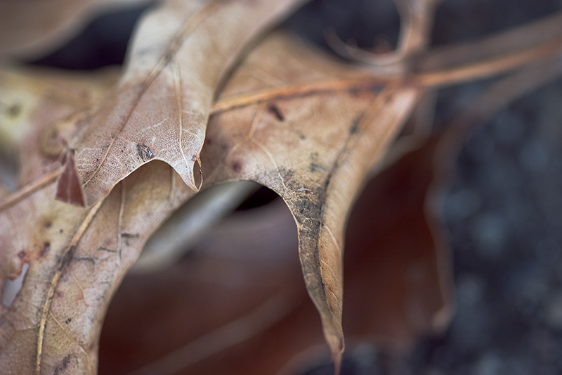 A macro shot of dead leaves.