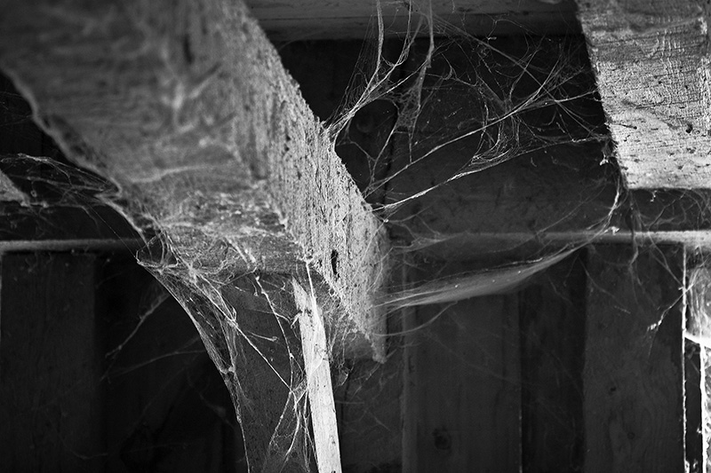 A beam in a barn, covered with cobwebs.