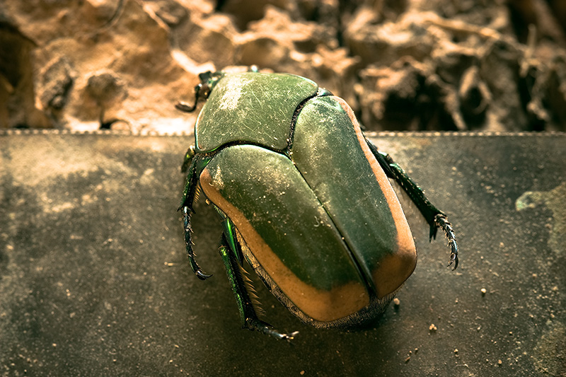 A green and yellow beetle.