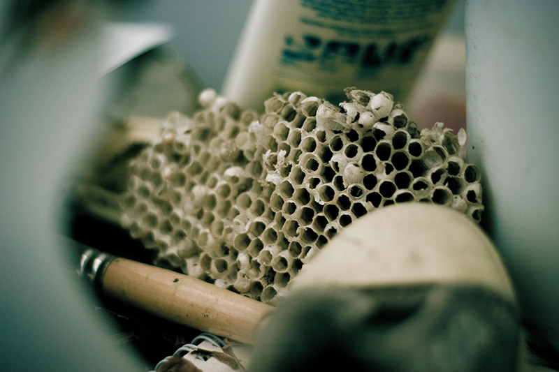 A paper wasp nest surrounded by clutter.