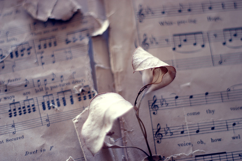 Dead eucalyptus leaves above sheet music.