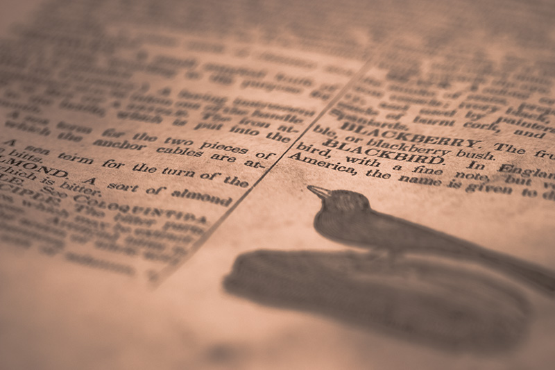 A detailed view of a dictionary page, featuring an illustration of a blackbird.