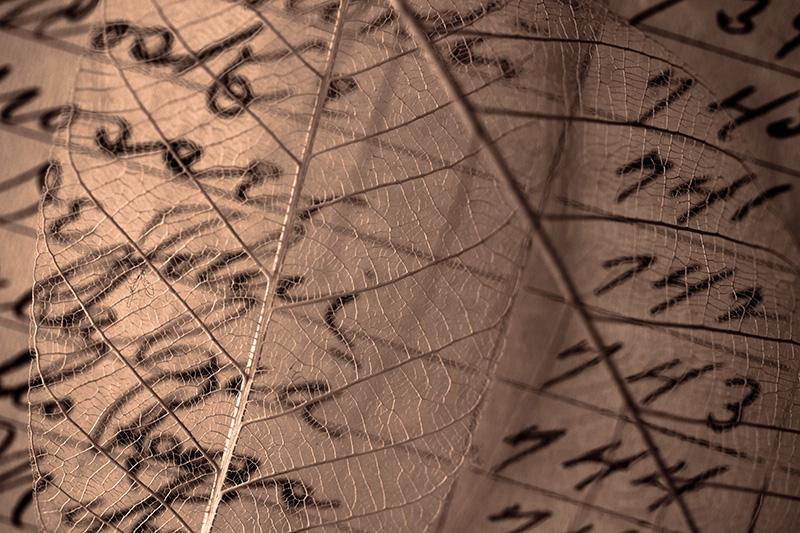 Leaf skeletons over a handwritten employee time log.