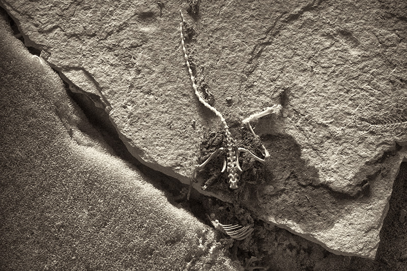 A rat skeleton lying on the stone surface where it died.