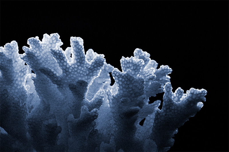 Backlit coral, resembling faces and hands reaching out of the shadows.