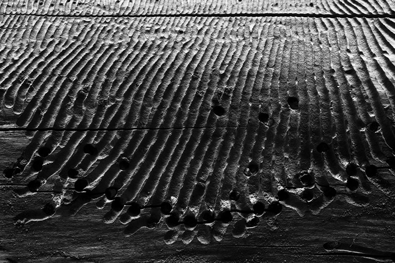 Lines chewed in wood.