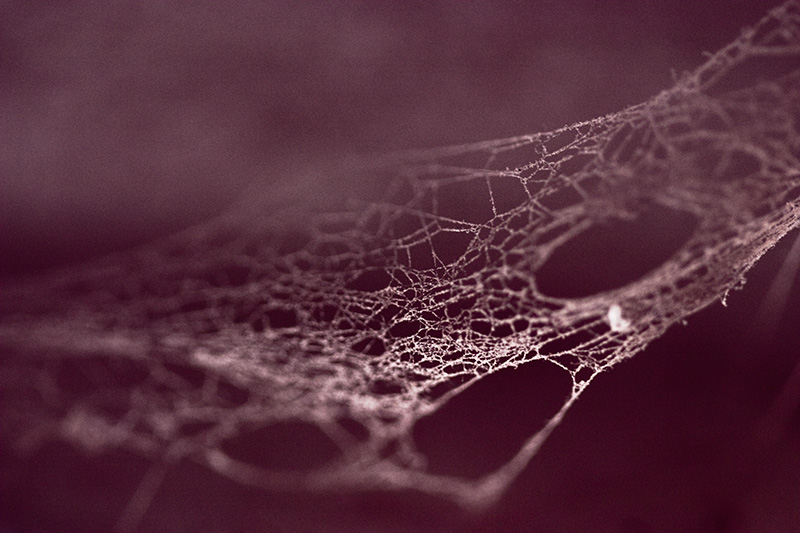 Macro image of a spider-web over a dark purplish-red background.