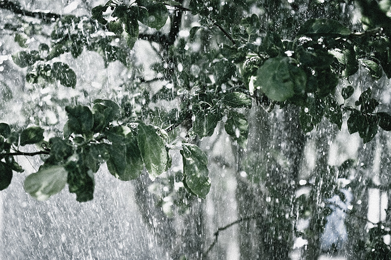 A downpour of rain among leaves on a tree.