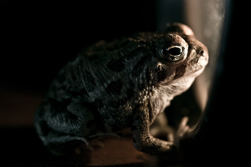 A toad gazes longingly out through a window.