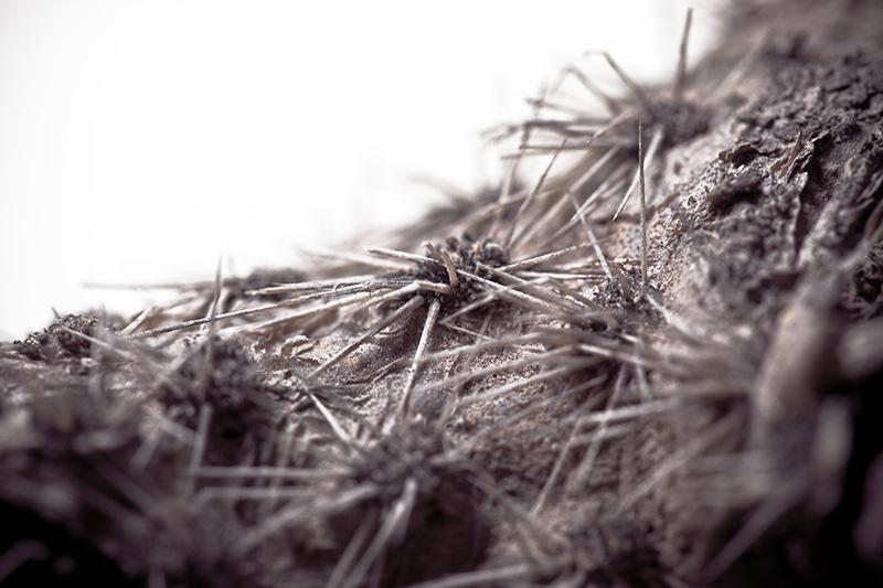 A closeup of cactus needles.