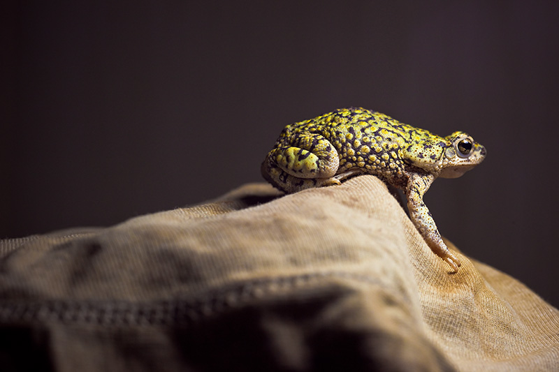 A green toad sitting atop a fabric peak.