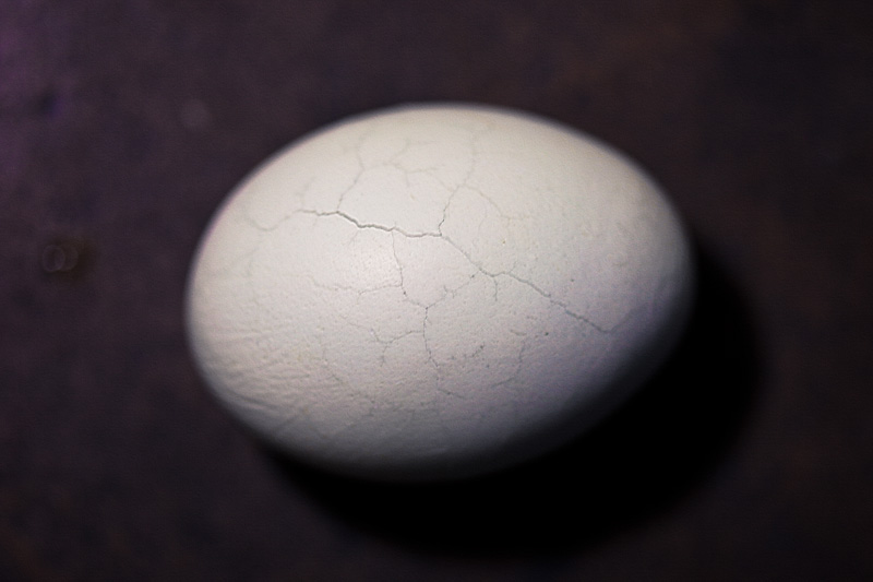An egg with cracks running through it.