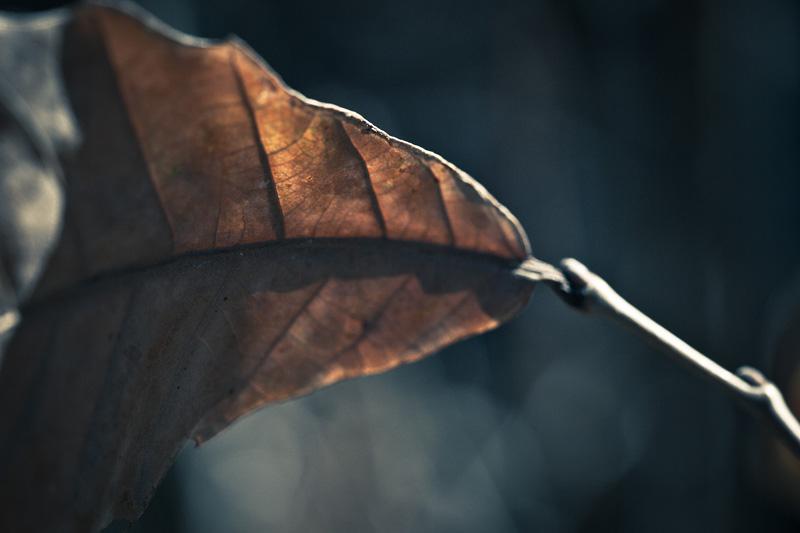 A dead leaf.