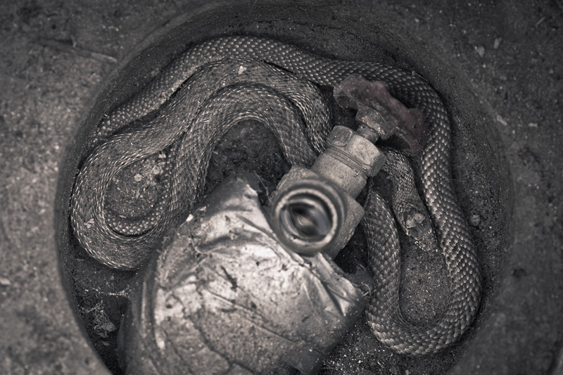 A snake curled up beneath a faucet.