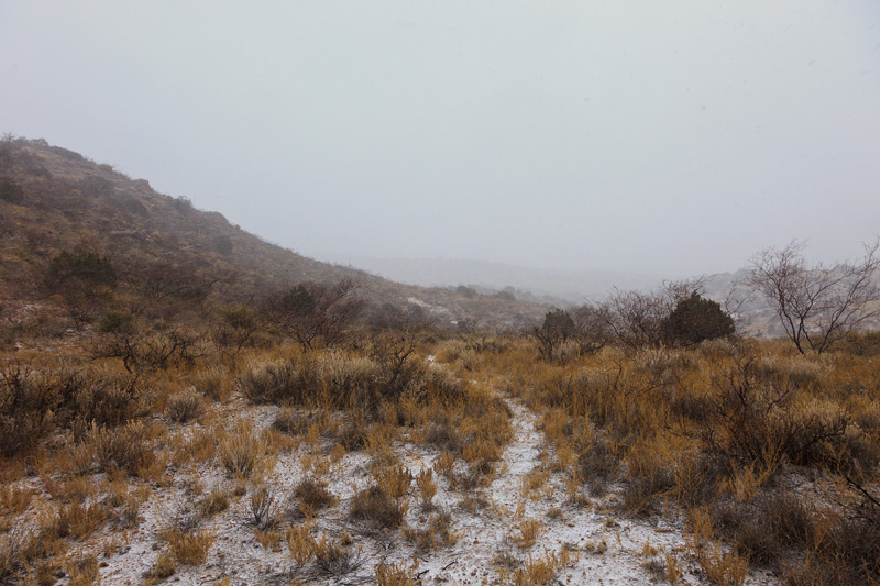 In the middle of a snowstorm at the saddle at the top of Mouser Canyon in the Peloncillo Mountains of New Mexico.