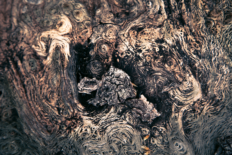 Patterns in bark resembling the painting by Van Gogh.