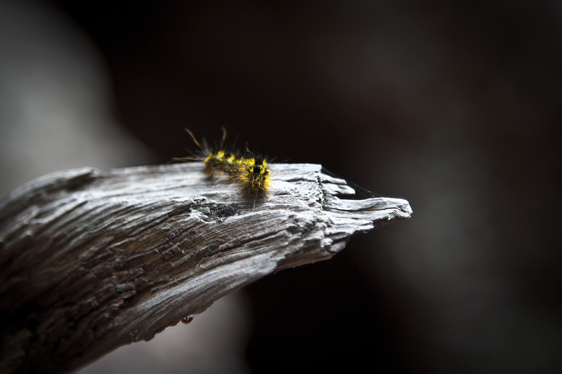 A caterpillar on a branch.