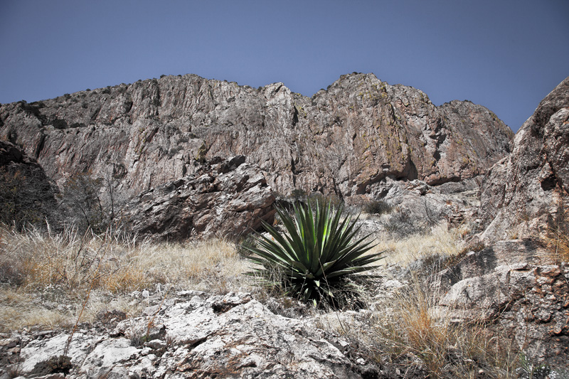 A yucca plant on a steep slope at the base of the cliffs below Darnell Peak in the Chiricahua Mountains.