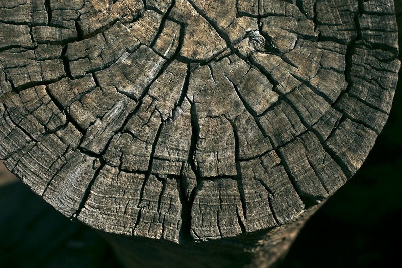 An old, weathered log, full of cracks.