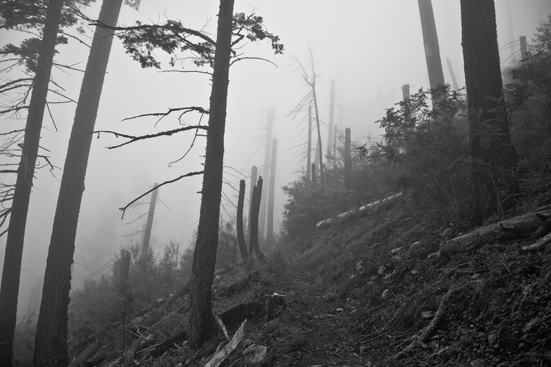 Climbing a trail through fallen trees among fog in the Pinaleño Mountains in Arizona.