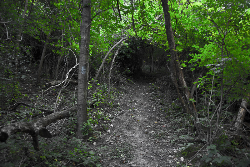 A creepy corridor into the woods, with a monster waiting on the other end.