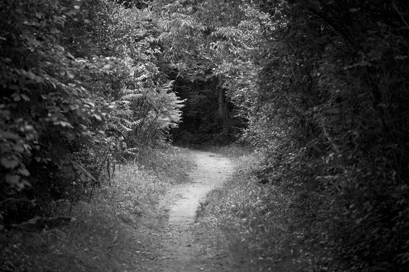 Part of the Blue Loop in Fort Custer State Park.