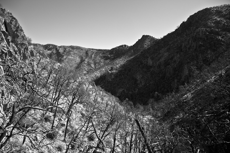 A burned portion of Sulphur Canyon in the Chiricahua Mountains of Arizona.