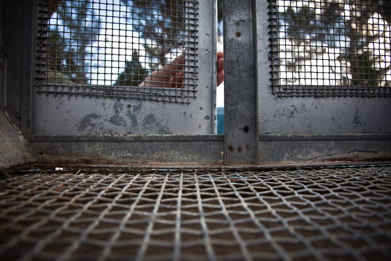 The inside of a cage with the door being closed and locked.