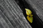 Leafed Behind