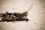 Yet Another Grasshopper