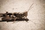 Yet Another Grasshopper