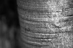 The Elephant Says Hello