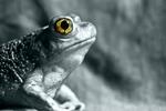 Sauron's Pet Toad